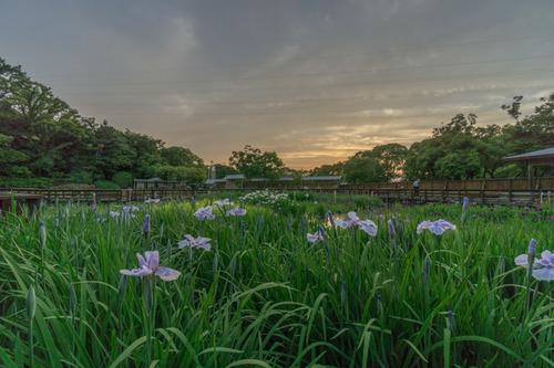 山田池公園-16