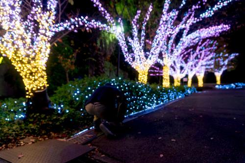 ひらかたパーク光の遊園地-15111150