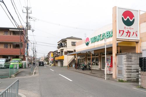ワカバ-15030301