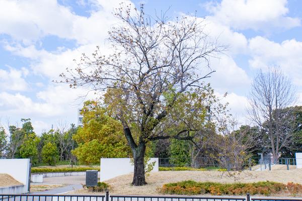 桜-2003242