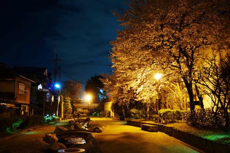 水面廻廊の夜桜130403-05
