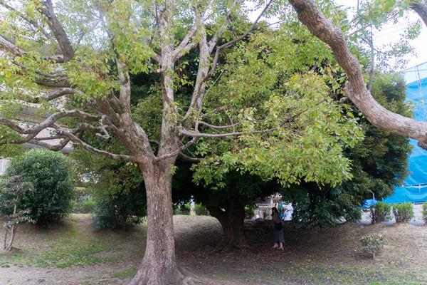 香里ケ丘西公園-20022512