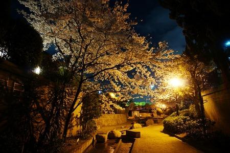 水面廻廊の夜桜130403-06