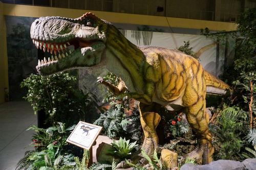 ひらパー恐竜大冒険-56