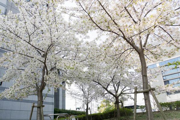 車塚公園-1804042