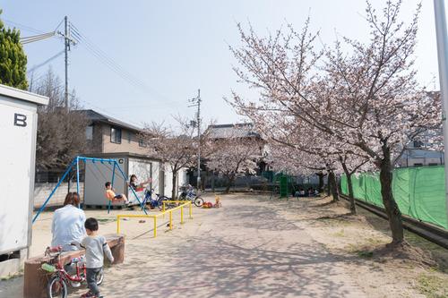 南中振公園桜-15033112