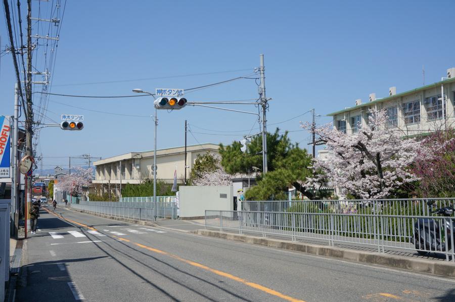 津田の桜-10
