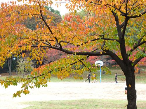樟葉東公園ヒデキさん