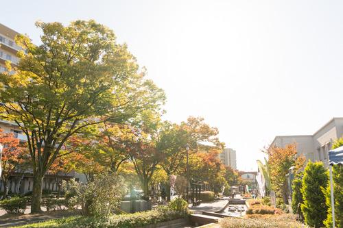 20151025けやきマルシェ-179
