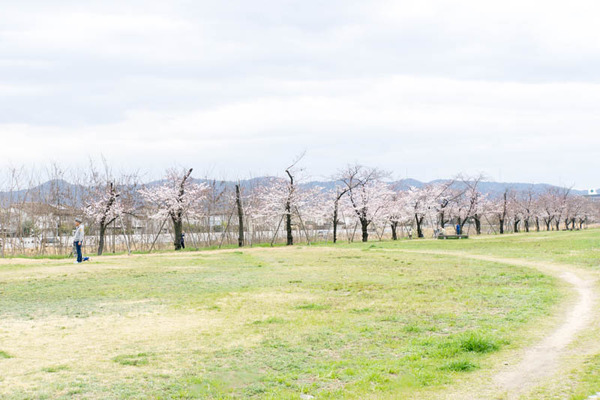 桜-1704062