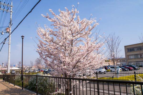 桜祭-1803263