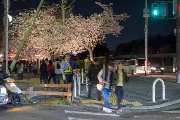 寝屋川桜-1803302
