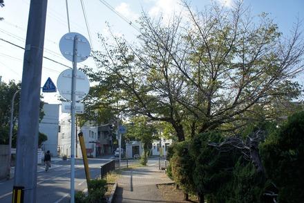 20101018sakura4