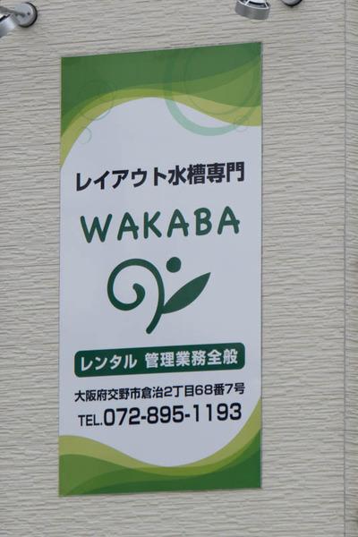 WAKABA-16061511