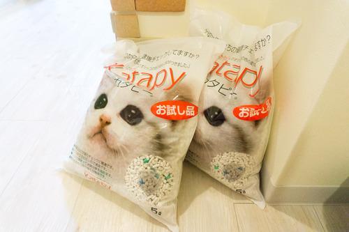 猫マンション-151210105