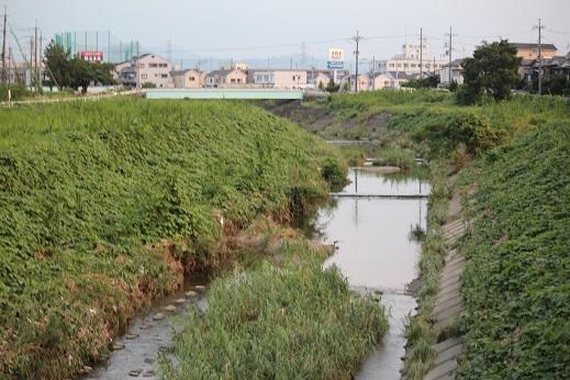 船橋川-02