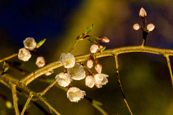 植物園-17040111