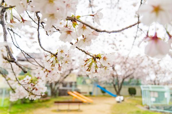 桜-2004025