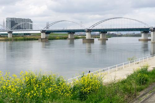 淀川河川公園-15041108