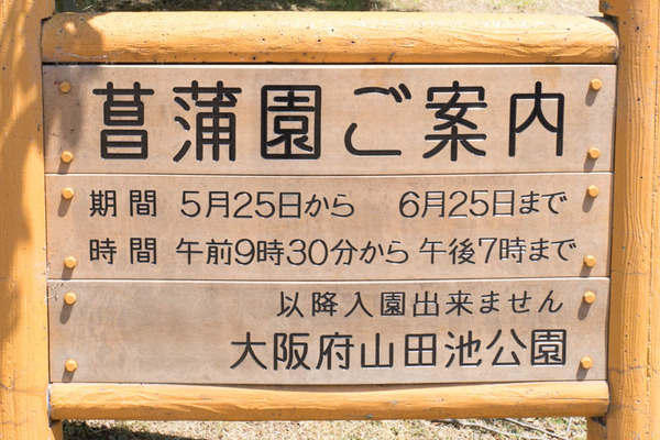 花しょうぶ園-1905254