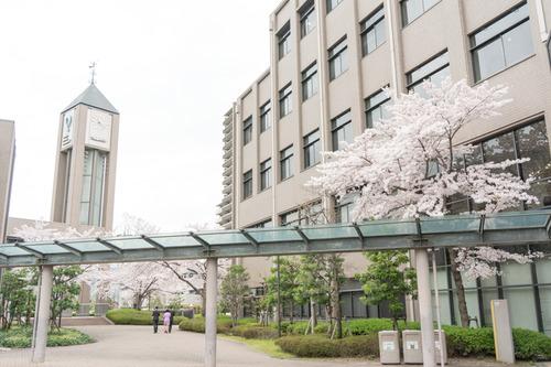 20150403歯科大桜-3