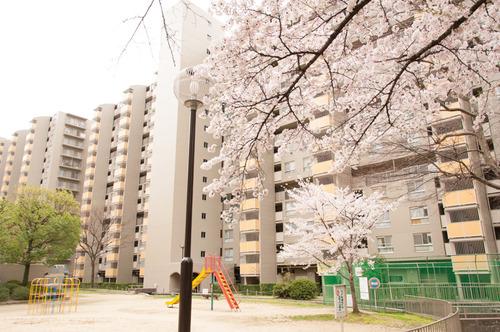 20150403くずは桜-3