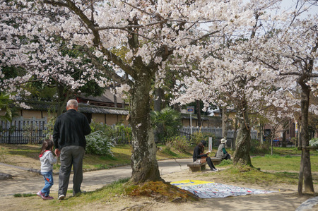 牧野公園の桜-7