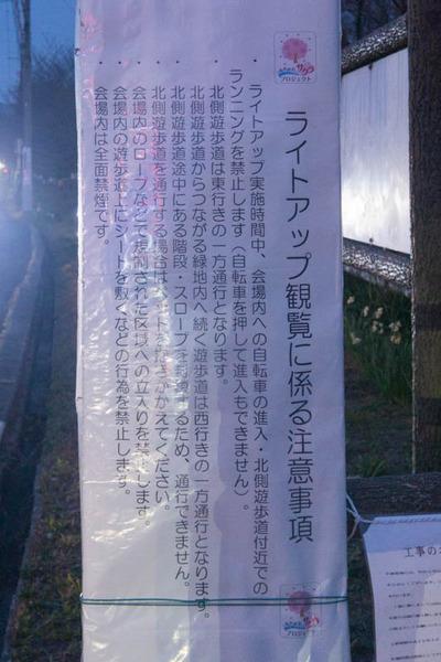 寝屋川桜-1703253