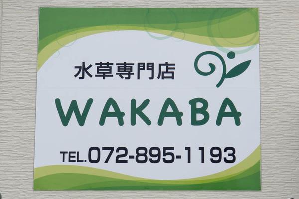 WAKABA-1606159