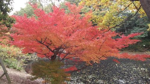 山田池公園01