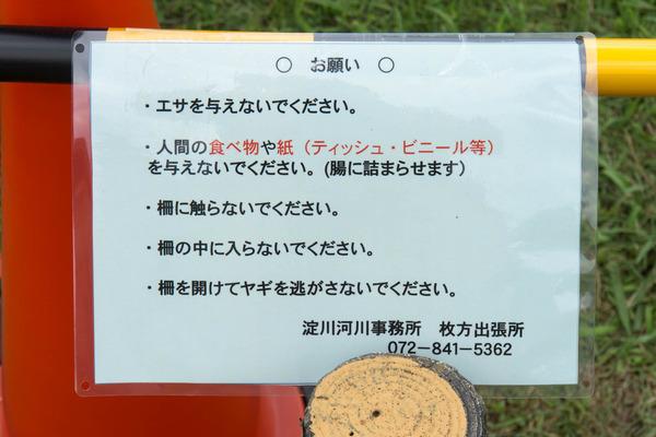 ヤギ-1607074