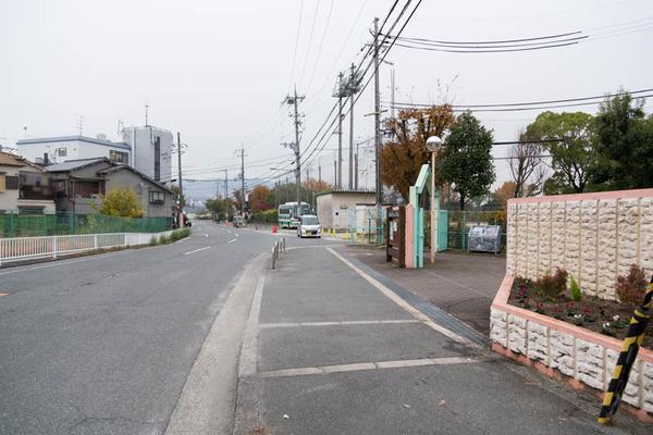 なかなかの森-17112930