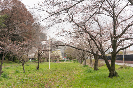 車塚公園-9