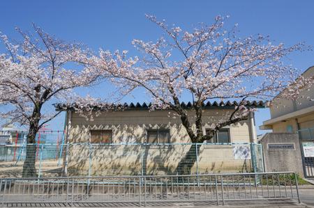 津田の桜-8