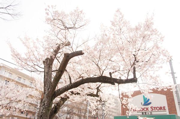 けやきマルシェ-446