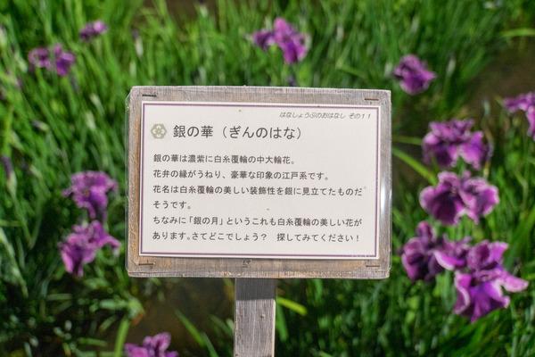 花しょうぶ-1906038
