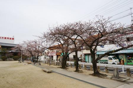 春日公園の桜130326-02
