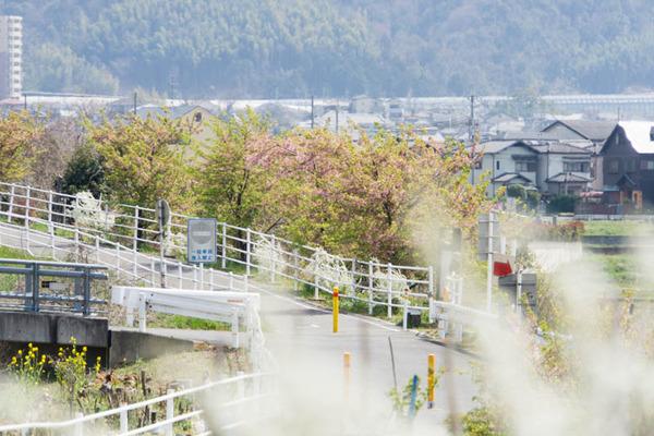 桜-1903261