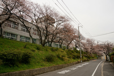 大阪市立高校の桜130327-02