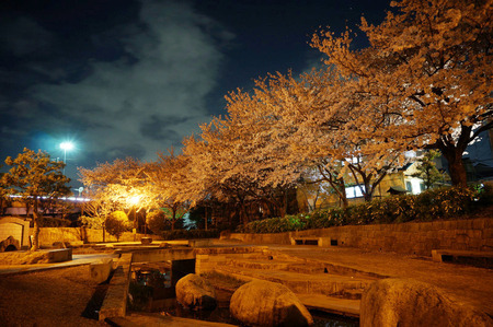 水面廻廊の夜桜130403-01