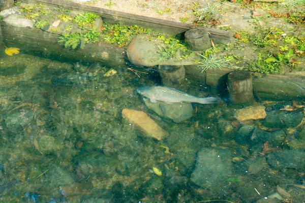 池の水全部抜く-18012058