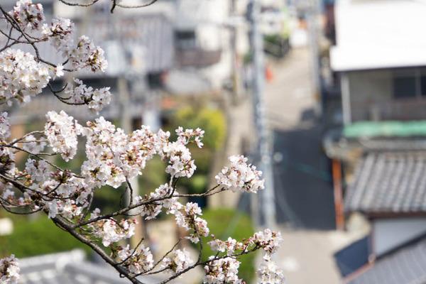 桜3-1803283
