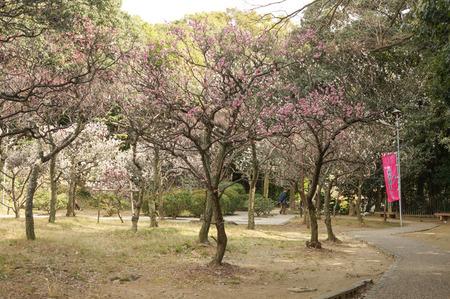 意賀美神社の梅-18