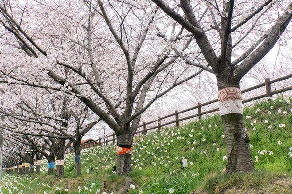 桜-1704066