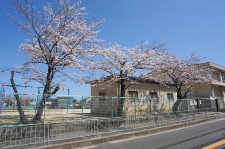 津田の桜-9
