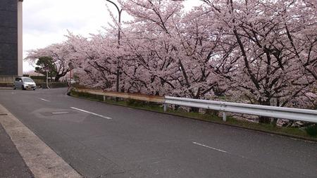 藤阪ハイツ130403_01s