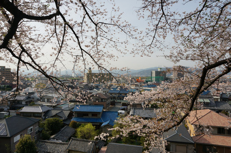 御殿山公園の桜130405-03
