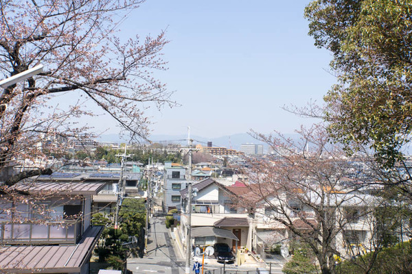 桜-1704041