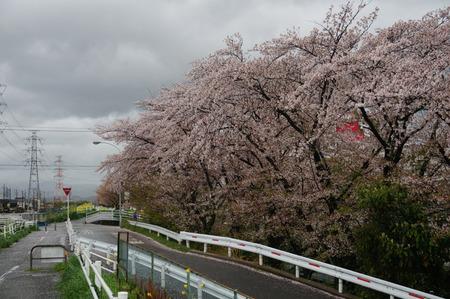 穂谷川の桜130406-02