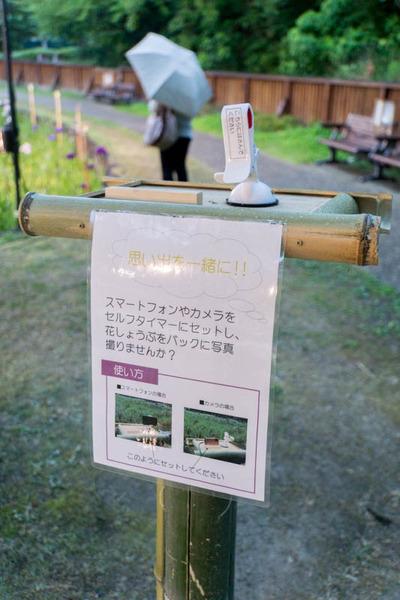 花しょうぶ-1606049